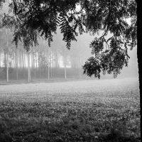 alberi (1)