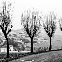 alberi (10)