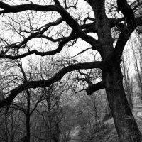 alberi (11)