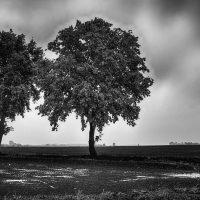 alberi (14)