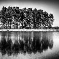 alberi (15)