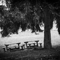alberi (16)