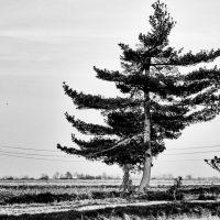 alberi (17)