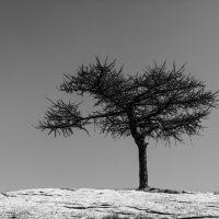 alberi (18)