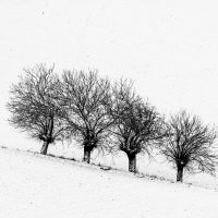 alberi (19)