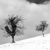 alberi (20)