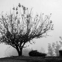 alberi (3)