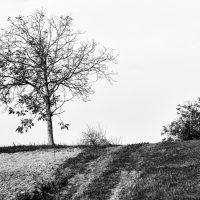 alberi (4)