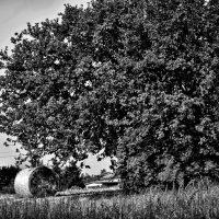 alberi (5)