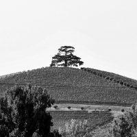 alberi (6)