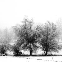 alberi (7)