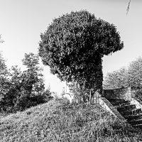 alberi (8)