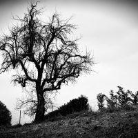 alberi (9)