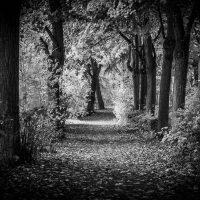 autunno (4)