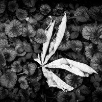 autunno (8)
