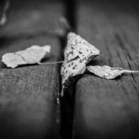 autunno (9)