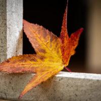 foglie d'autunno (10)
