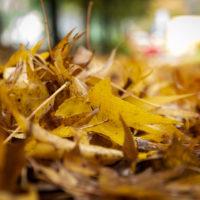 foglie d'autunno (2)