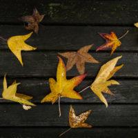 foglie d'autunno (3)