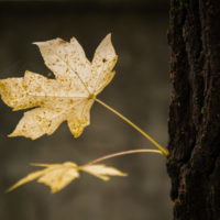 foglie d'autunno (4)