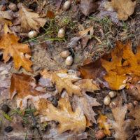 foglie d'autunno (5)