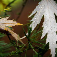 foglie d'autunno (7)