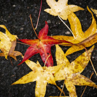 foglie d'autunno (8)