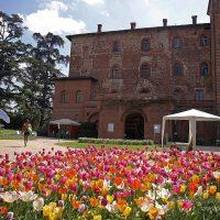 05_CASTELLO DI PRALORMO_Messer Tulipano 0h