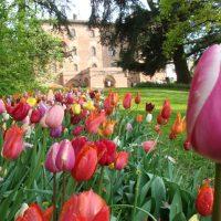 06_CASTELLO DI PRALORMO_Messer Tulipano 0a